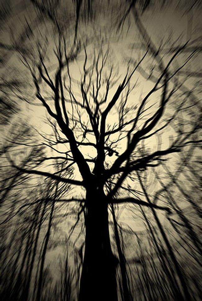pohon-mati1